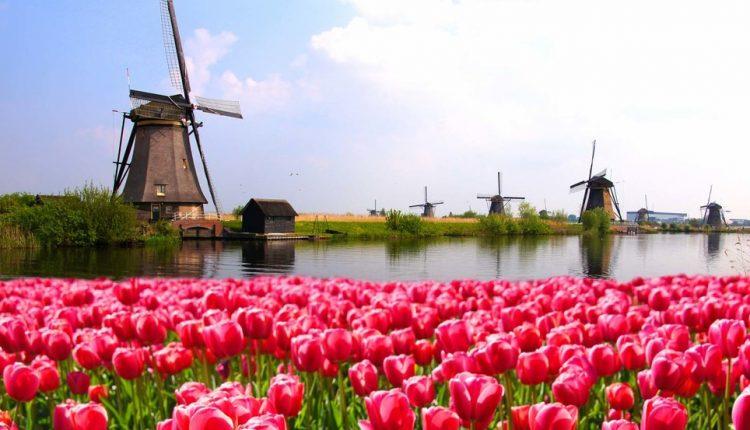 عکسهایی زیبا از مزارع لاله در هلند