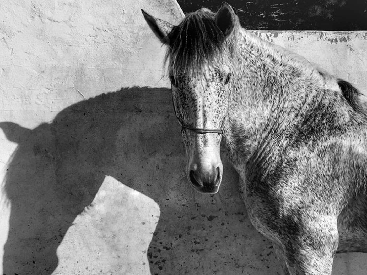 عکس برگزیده بخش عکاسی از حیوانات