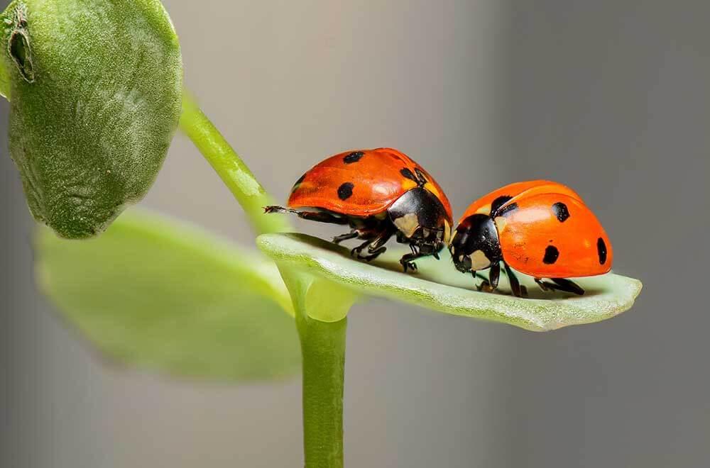 نکات آموزشی عکاسی از حشرات
